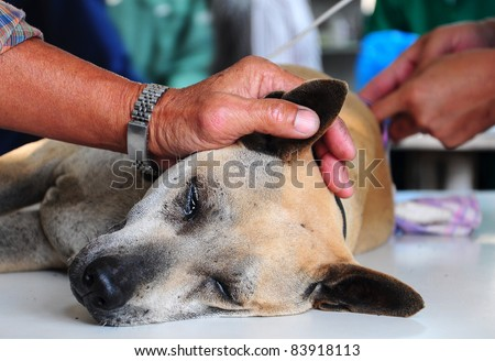 dog under anesthetic