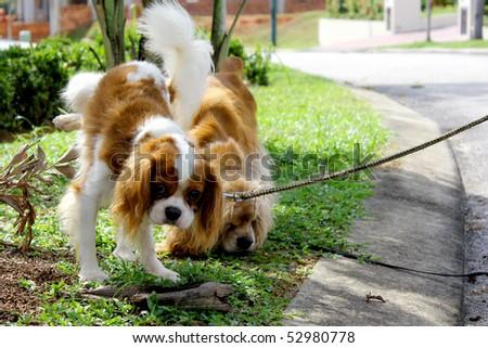 stock-photo-dog-urinate-52980778.jpg