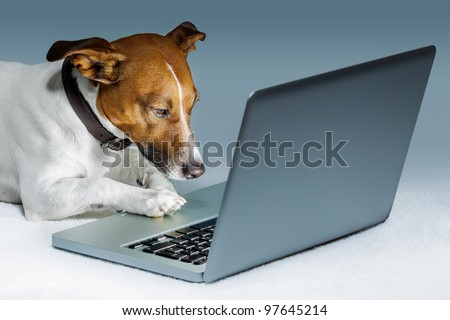 dog using a computer and browsing the internet