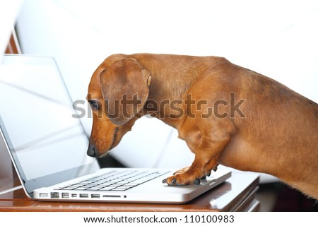 dog using computer - stock photo