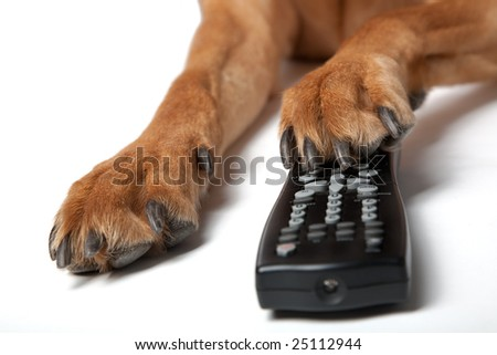 Dog using remote control to watch television