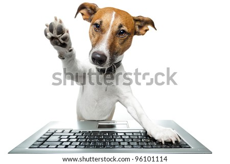 dog using the keyboard on computer and high five