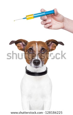 dog vaccination with a big blue Syringe - stock photo
