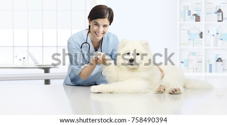 dog veterinary examination smiling Veterinarian check the dog's paw on table in vet clinic