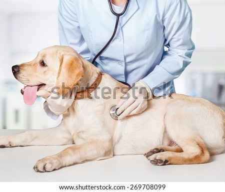 Dog. Veterinary treatment - lovely Maltese dog and friendly veterinary