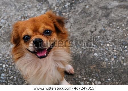 Dog waiting  #467249315