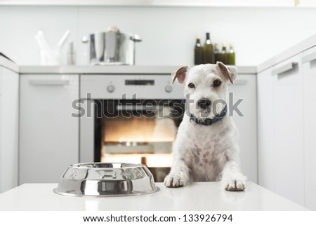 Dog waiting for a meal #133926794