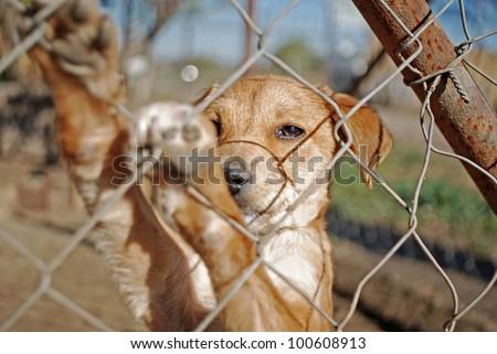 dog waiting for adoption