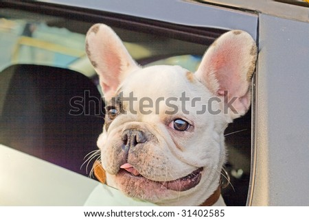 Dog waiting in a taxi, while his master is away