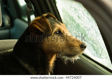 dog, waiting in the frosted car