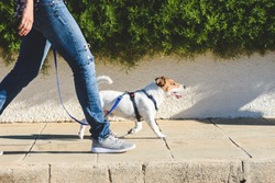 Dog walker strides with his pet on leash while walking at street pavement