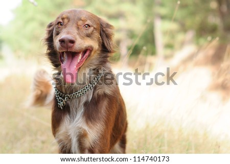 Dog walking in the forest - stock photo
