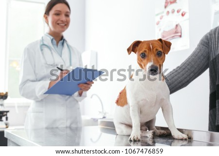 Dog was brought for inspection to the vet. Veterinary clinic concept. Services of a doctor for animals, health and treatment of pets