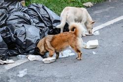 Dog waste picker