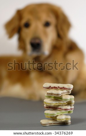 Dog, watching a pile of dog-biscuits - stock photo