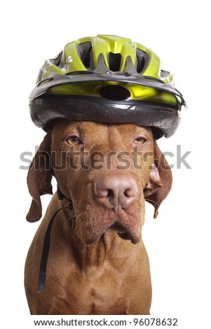 dog wearing bicycle helmet on white background