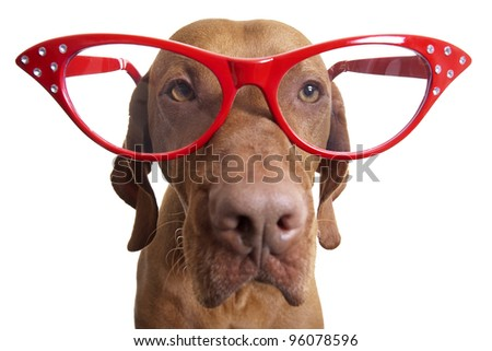 dog wearing extra large red glasses