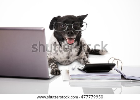 Dog Wearing Eyeglasses With Laptop And Calculator Against White Background