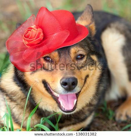 Dog wearing female red hat relaxing outdoors - stock photo