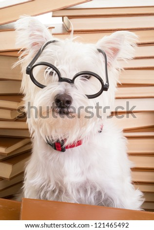Dog wearing glasses - stock photo