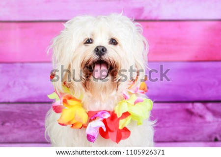 Dog wearing lei #1105926371