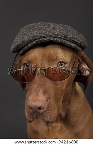 dog wearing newsboy hat and glasses