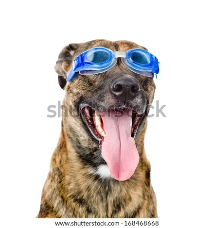 b9c8f3613d0 Dog wearing swimming goggles isolated on white background Images and ...