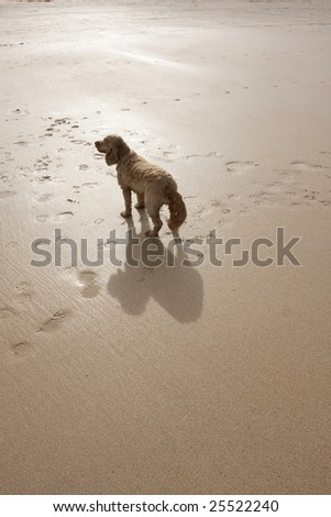 dog with a big shadow on a sandy beach