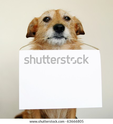 Dog with a blank sign Сток-фото ©