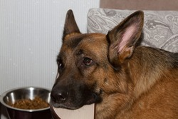 dog with a Cup of food