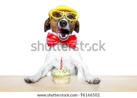 dog with a cupcake - stock photo