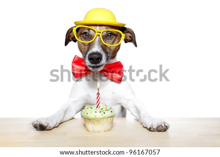 dog with a cupcake