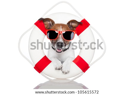 dog with a lifesaver and hat