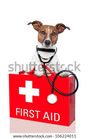 dog with a red  first aid kit