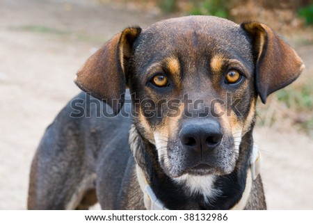 Dog with a speaking glance