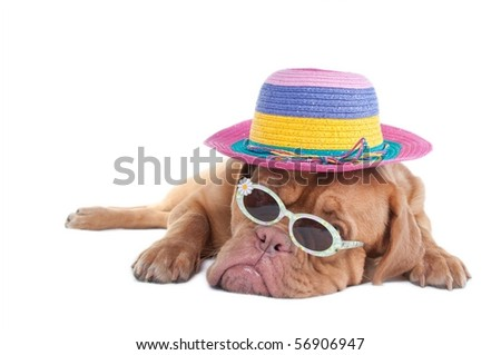 Dog with a summer hat and sunglasses dreaming of seashore