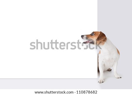 Dog with banner. Jack Russel terrier above white placard - stock photo