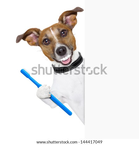 dog with big white teeth with  a toothbrush behind banner placard