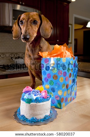 Dog with birthday cake and gift