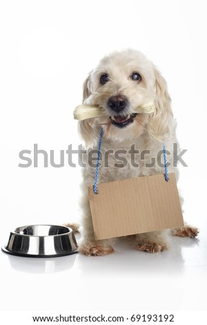 Dog with bone in its mouth wearing cardboard sign around neck waiting for food