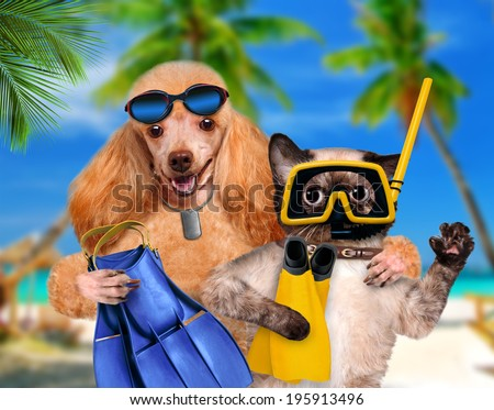Dog with cat diver.