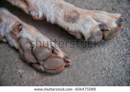 dog with dirty feet #606475088