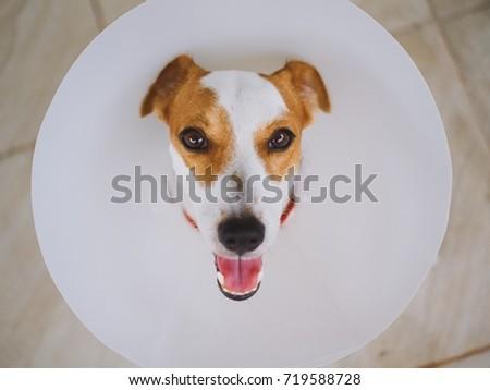 Dog with E-Collar #719588728