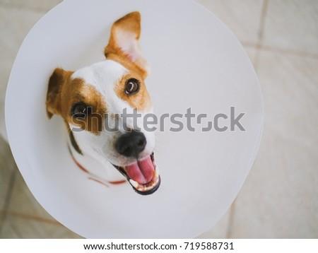 Dog with E-Collar #719588731