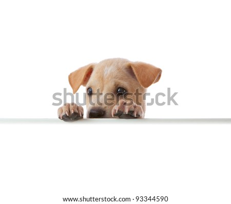 dog with empty board on white background