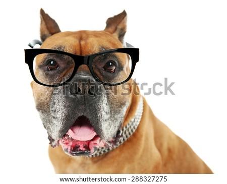 Dog with eyeglasses isolated on white
