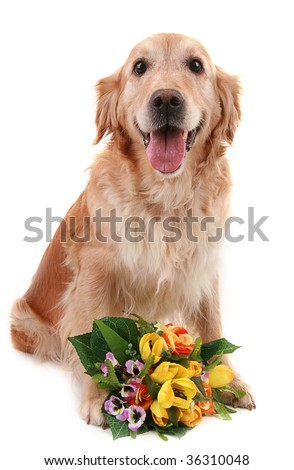 dog with flowers isolated on white background
