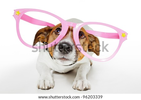 dog with funny glasses