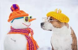 Dog with glasses and hat looking at funny dressed snowman