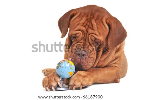 Dog with globe. Our world is in safe hands concept